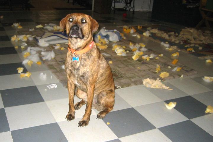 Bad_Doggie